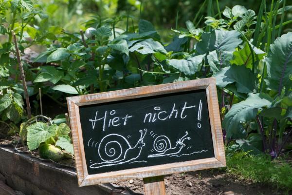 Schneckenverbot_86684289