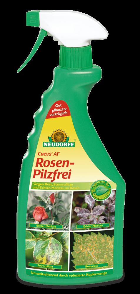 Rosen-Pilzfrei