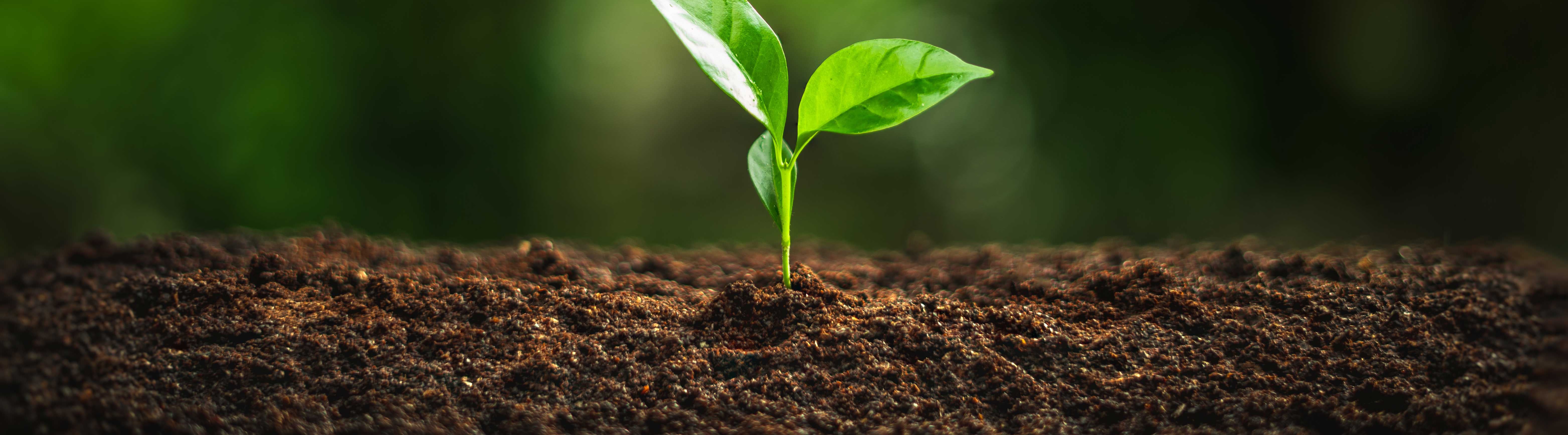 Biplantol Produkt Header Homöopathie für Pflanzen